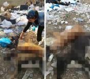 Ayakları Bağlı Halde Ölmüş İki Köpek Bulundu