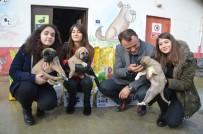 BAKIM MERKEZİ - Harçlıkları İle Köpeklere Mama Aldılar