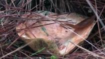 YAĞIŞLI HAVA - 'Tüm Mantarlar Yenir Ama Bazıları Sadece Bir Kez'