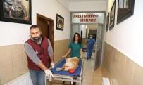 ÇANKAYA BELEDIYESI - Çankaya Belediyesi'nden Kasım Ayında 192 Sokak Hayvanına Sıcak Yuva