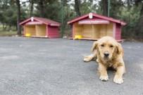YAVRU KEDİ - Eyüpsultan Belediyesinin Kampanyasına Hayvanseverler Kayıtsız Kalmadı