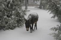 KAR TOPU - Kar Yağışından En Çok Sokak Köpeği Ve Eşek Etkilendi