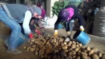 AZERBAYCAN - Sertifikalı Ahlat Patatesi Tohumları Yurt Dışı Pazarında