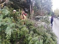 ATAKÖY - Şiddetli Rüzgar Ağacı Arabanın Üstüne Devirdi