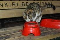 SOSYAL SORUMLULUK PROJESİ - Sokak Kedileri İçin Barınakları Renklendirdiler