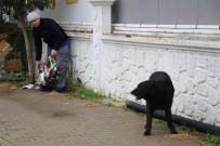 Yalova'da Sokak Hayvanlarına Yiyecek Dağıtıldı