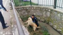 ZABITA MEMURU - Kanala Düşen Köpeği Zabıta Ekipleri Kurtardı