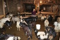 Zara'da Veba 200 Küçükbaş Hayvanı Telef Etti