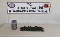 Zeytin Ağacından Uyuşturucu Çıktı