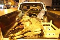 Dağ Keçisi Öldürüp, Karşı Çıkan Köylüyü Darp Ettiler