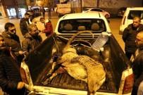 Dağ Keçisini Vuran İki Şahıs Yakalandı