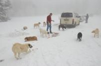 AHMET YıLMAZ - (Özel) Donmak Üzere Olan Köpekleri Sobanın Yanında Isıtıp Etle Besliyor