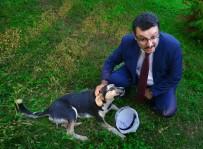 HAYVAN SEVGİSİ - Sokak Hayvanları Sahipsiz Bırakılmıyor
