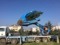 ORMAN MÜDÜRLÜĞÜ - 156 Çam Ağacı Cezaevi Bahçesine Naklediliyor