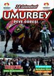 DEVE GÜREŞİ - 28. Geleneksel Umurbey Deve Güreşi Festivali 11 Şubat'ta