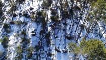 HASAN KESKIN - Bolu'da Fırtına Sarıçam Ağaçlarını Devirdi