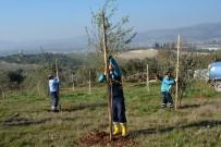 ÜÇPıNAR - Dikilen Ağaçlar Vatandaşın Ekonomisini Canlandıracak