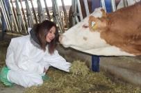 SÜT ÜRETİMİ - Mühendisliği Bıraktı, Süt Çiftliği Kurdu