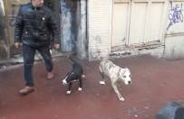 KAYNAK MAKİNESİ - Taksim'de Metruk Binada Dövüş Köpekleri Bulundu