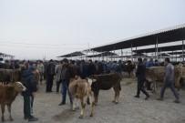 HAYVAN PAZARI - Şap Karantinası Altında Bulunan Hayvan Pazarı Yeniden Açıldı