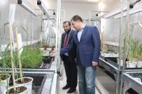 Türkiye'de İlk Hızlı Bitki Islahı Hayata Geçirildi