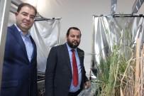 QUEENSLAND - Türkiye'de İlk Hızlı Bitki Islahı KMÜ'de Hayata Geçirildi