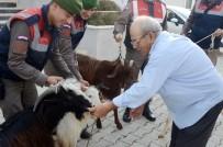 SİGARA İZMARİTİ - Antalya'da Küçükbaş Hayvan Hırsızları Yakalandı