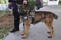 ADNAN MENDERES HAVALİMANI - Eğitimdeki Polis Köpekleri Görev İçin Hazırlanıyor