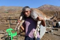 YAZıBAŞı - Kilometrelerce Yaralı Dağ Keçisini Sırtında Taşıyan Çoban Bu Kez Yem Çuvallarını Taşıdı