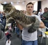 BUDAPEŞTE - Macaristan'da kedi güzellik yarışması