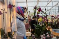 Orkide Gül İle Yarışıyor