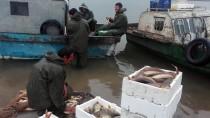ELEKTRİK ÜRETİMİ - Sivas'ın Balığı Takas İçin Samsun'a Götürülüyor