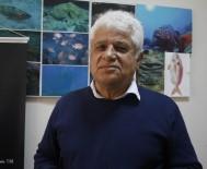 KıZıLDENIZ - Akdenizin İşgalci Balıkları Su Altında Görüntülendi