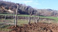 MISYON - Belediyeden Ağaç Katliamı İddialarına Cevap