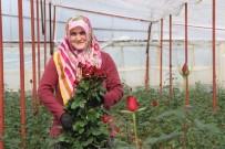 BAĞLAMA - Sevgililer Günü İçin 45 Milyonluk Çiçek İhracatı