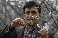 ERİK AĞACI - Antalyalı Çiftçiden Afrin'deki Askerlerin Hamile Eşlerine Anlamlı Hediye