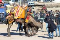 DEVE GÜREŞİ - Ayvalık 4. Geleneksel Büyükşehir Belediyesi Deve Güreşi Festivali 'Ne Hazırlanıyor