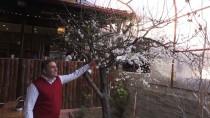 YAZ MEVSİMİ - Erik Ağacı Çiçek Açtı