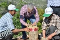 KUZEY KIBRIS - Mersin'de Delice Aşılamalarında Rekor Kırıldı