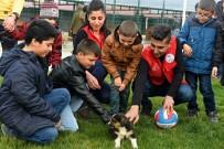 GENÇLİK MERKEZİ - Hayvan Barınağındaki Yavru Köpekler İlgi Odağı Oldu