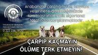 TRAFİK SİGORTASI - Aracın Çarptığı Köpeğe Kısa Süre İçerisinde Yardım Eli Uzandı