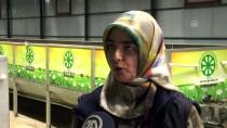 KAPALI ALAN - Fabrika Atıkları Solucan Gübresine Dönüştürülüyor