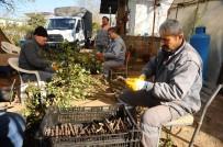 TAFLAN - Kepez Belediyesi 2017'De 110 Bin Çiçek Üretti
