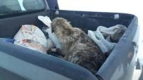 KILIMLI - Yaralı Köpeğe Belediye Sahip Çıktı