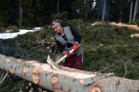 AYDOĞAN - Ekmeklerini Ormandan Kazanıyorlar