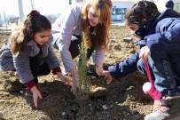 Kayyum Park Yaptı, Çocuklar Ağaç Dikti