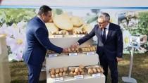 YERLİ TOHUM - Tescilli 4 Yerli Patates İhaleyle Satışta