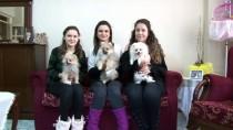 KAPIKULE SINIR KAPISI - Üniversite Öğrencisi, Yavru Köpeklere 'Yediemin' Oldu