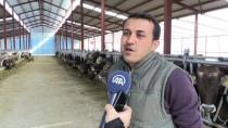 KREDİ DESTEĞİ - Almanya'dan Getirdiği İneklerle Antalya'da Çiftlik Kurdu