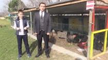 'İlkokulun Tavukları' İhtiyaç Sahibi Öğrenciler İçin Yumurtluyor
